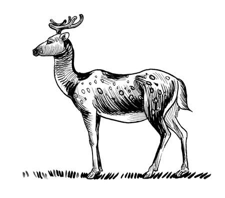 Standing wild deer. Ink black and white drawing