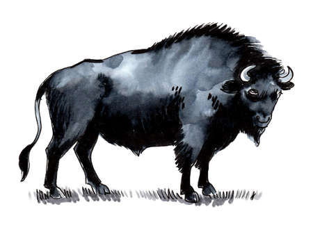 Ink and watercolor drawing of a standing black bison bull