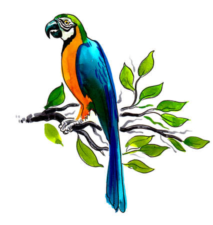 Parrot bird sitting on a tree branch. Ink and watercolor drawing