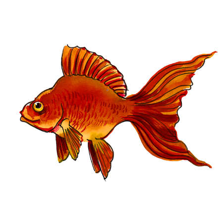 Golden fish on white background. Ink and watercolor drawing Banco de Imagens