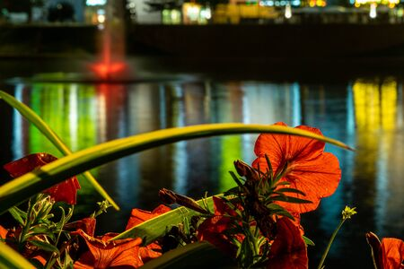 Red petunias near Brateevo pond, Moscow, Russia. Blue hour.