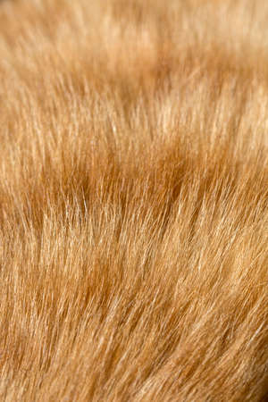 villi: Fur of cat close up image for background Bright red and orange natural fur of domestic cat macro