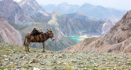 Pack animal carrying sheep decorated with traditional harness and other gear for transportation of load on wild deserted mountain area blue lake perspective Stockfoto