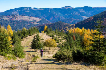 trekking pole: Female Hiker with Backpack and Trekking Pole Walking on Pathway in Autumnal Forest European Rural Landscape Outdoor Sunny Day