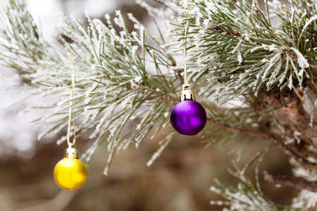 xmass: Decorated Branch of Christmas Tree outdoor