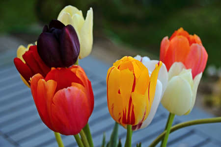 group of colorful tulips Stock fotó
