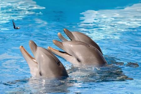 Feeding of dolphins at aquarium