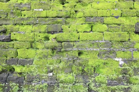 Texture of old stone wall covered green moss Stock Photo - 12682310