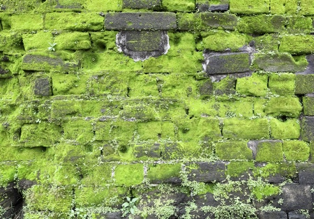Texture of old stone wall covered green moss Stock Photo - 12682305