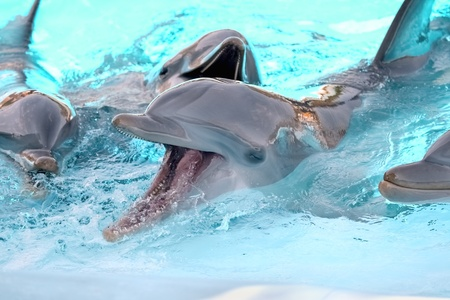Dolphins playing in aquarium Stock Photo