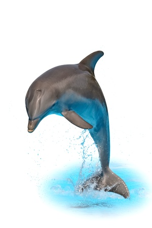 Jumping dolphin isolated on white background with water and spray photo