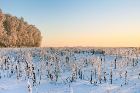 Winter landscape with rime forest and sunset lighting photo