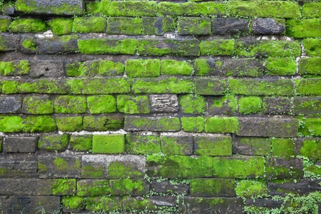 Texture of old stone wall covered green moss photo