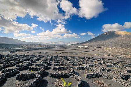 Volcanic desert landscape of Lanzarote island  Canary Islands, Spain  photo