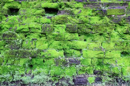 Texture of old stone wall covered green moss, Fort Rotterdam (Makassar, Indonesia)
