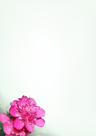 Decoration of a sheet of paper with a flower peony for congratulatory letters photo