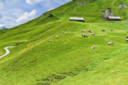 Alpine highland pastures, Grindelwald - Switzerland