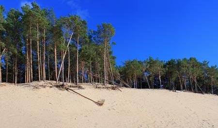 Panoramic view of the Baltic dunes, Balta kapa - Jurmala - Latvia. Image assembled from few frames Stock Photo
