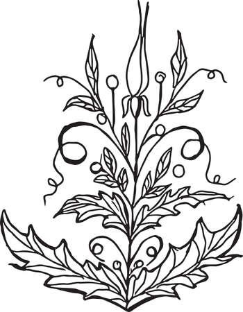 Flower Convolvulus.Vector illustration. Vettoriali