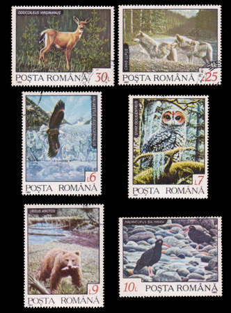 postal card: ROMANIA - CIRCA 1992  Six stamps printed in Romania showing romanian wild animals, circa 1992  Stock Photo