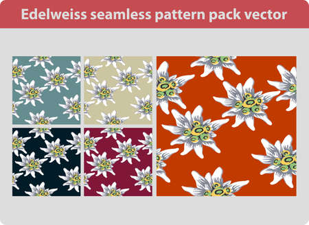 Edelweiss flower seamless pattern pack vector