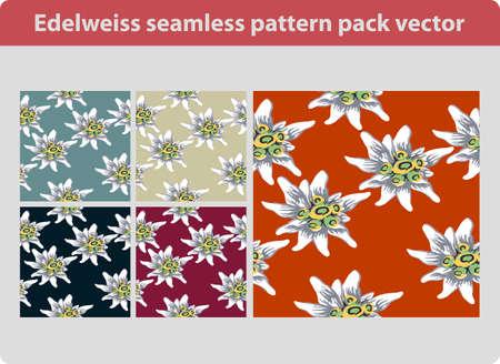 swiss alps: Edelweiss flower seamless pattern pack vector