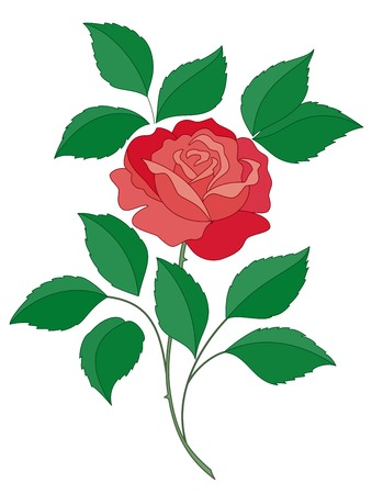 scarlet: isolated flower of a rose with green leaves and scarlet petals Illustration