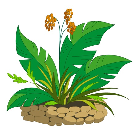 flower bed: Bed with a tropical plant with orange berries