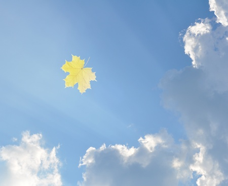 Blue sky with white clouds and the yellow flying autumn maple leaf photo