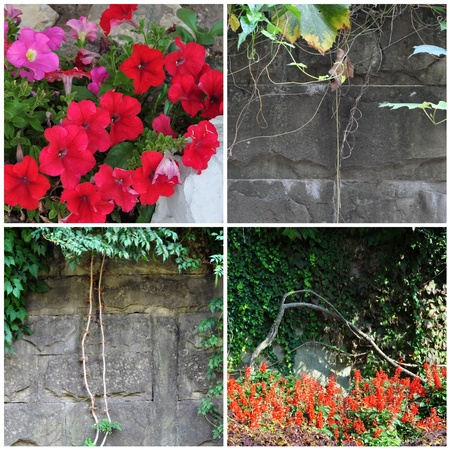 Set natural photo: flowers, plants and stone wall photo