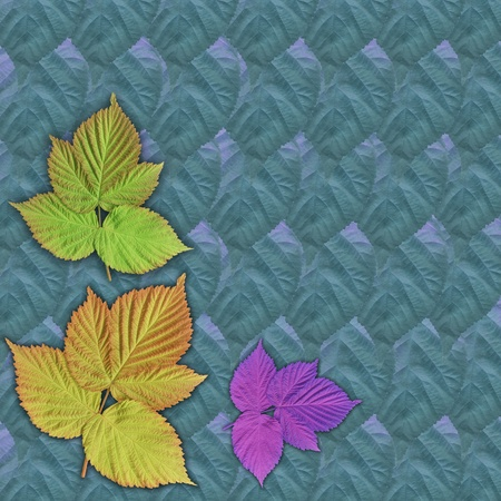 Abstract natural background, colorful leaves of plants photo