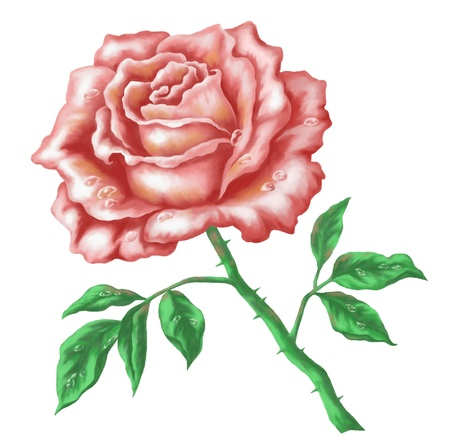 Flower rose. Picture, acrylic, hand-draw painting, isolated on white background photo