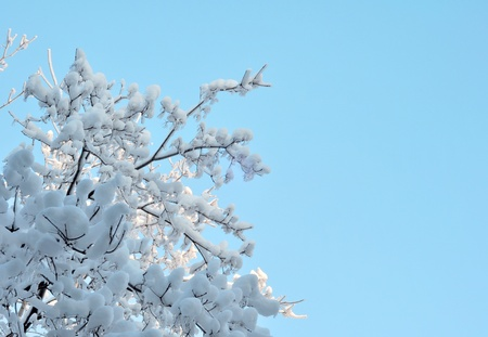 Snow and ice on branches. Russia, Moscow, December