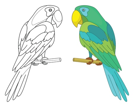 Bird parrot sits on a wooden perch, colored and black contour on white background  Ilustracja