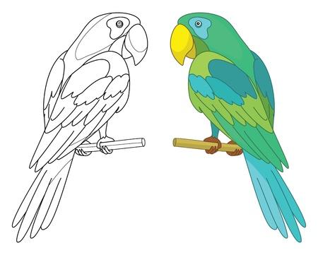 parrot: Vogel papegaai zit op een houten baars, gekleurde en zwarte contour op een witte achtergrond
