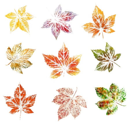 Blackberry leaves, abstract oil painting, isolated on white background photo