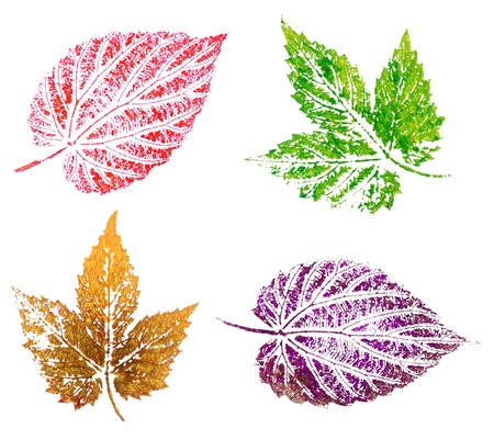 Hop leaves, abstract oil painting, isolated on white background photo