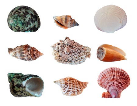 Set different seashells isolated on white background