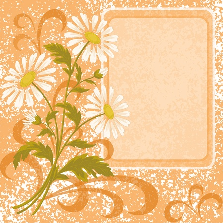 Floral holiday background with chamomile flowers and frame  Vector