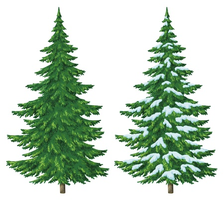 Fir trees, summer and winter with snow, Christmas decoration, isolated on white background photo