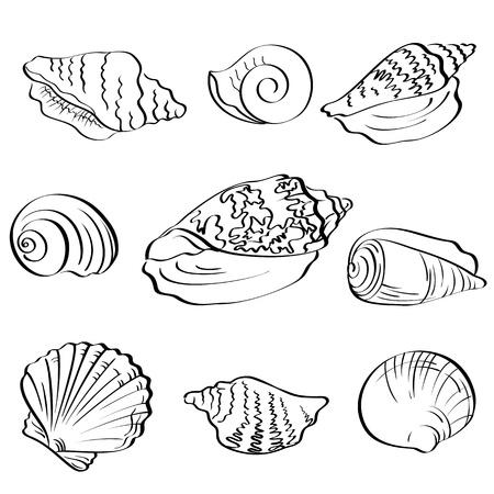 Set different marine seashells, black contour on white background