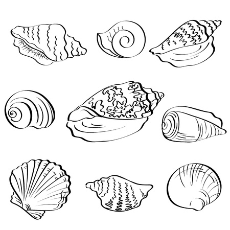 Set different marine seashells, black contour on white background