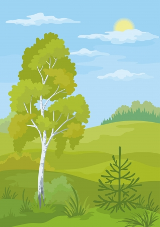 coppice: Forest landscape with birch, fir tree and blue sky.  Illustration