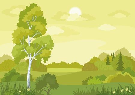バーチ、モミの木や花ベクトルとウッドランド風景