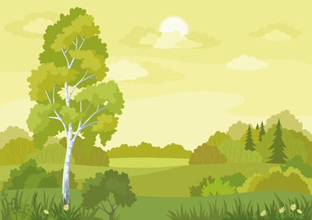 Woodland landscape with birch, fir trees and flowers  Vector