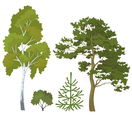 Set plants  birch, pine, fir tree and bush isolated on white background  Vector Vector