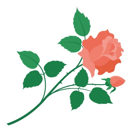 freshens: Flower rose with green leaves and red petals isolated on white background  Vector Illustration