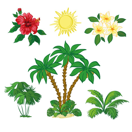 subtropical: Exotic Set, Sun, Palm Trees, Hibiscus and Plumeria Flowers, Green Plants and Leaves Isolated on White Background. Vector Illustration