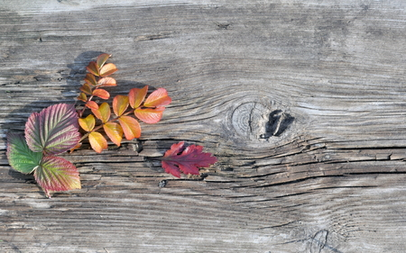 wild rose: Autumn Raspberry and Wild Rose Leaves on the Old Board Stock Photo