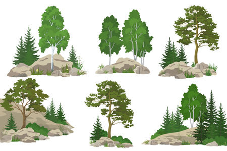 Establecer paisajes, de coníferas y de hoja caduca, pino, abeto, abedul, flores y la hierba en las rocas, aislado sobre fondo blanco. Vector